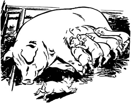Sow With Piglets Vector