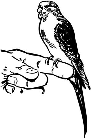 parakeet: Parakeet 2 Illustration