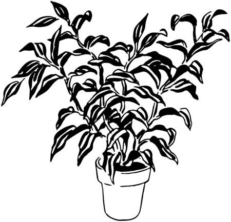 home gardening: Plant 8