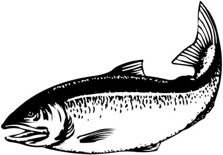 salmon leaping: Salmon Illustration