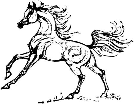 Stallion Illusztráció