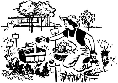 woman gardening: Woman Gardening
