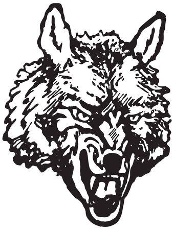 Wolf - predatory canine