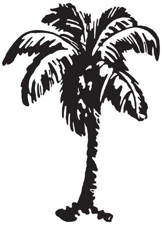 Palm Tree 2 Stockfoto