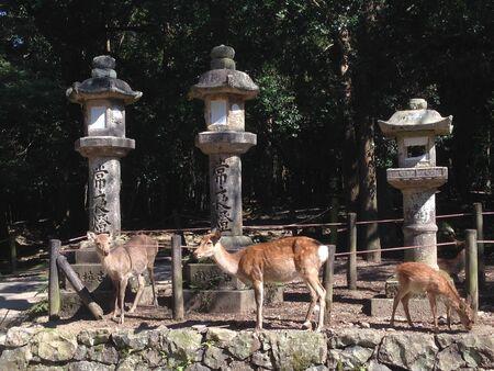 nara: Deer family in Nara park,Japan Stock Photo