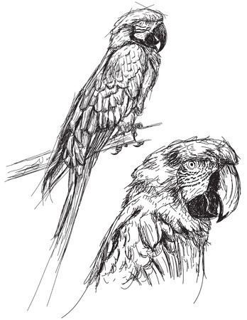 Parrot sketches