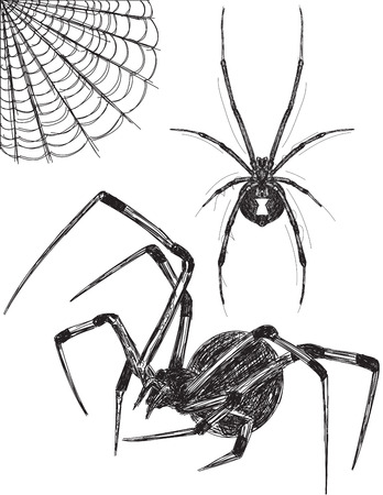 Black Widow spider sketches Vector