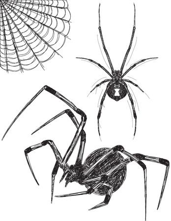 viuda: Bocetos de ara�a Negro Widow Vectores