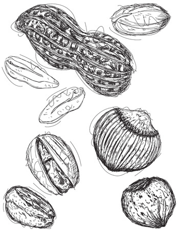 mixed nuts: Peanut, pistachio, and chestnut sketches Illustration