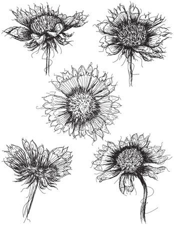 Wildflower-Skizzen Standard-Bild - 36929294
