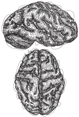 Brain Sketches, A sketch of the top and side view of a brain