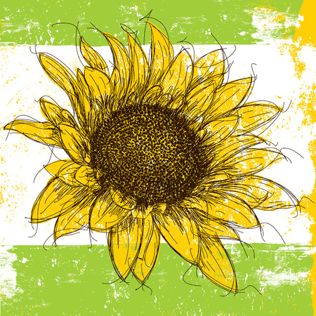 sunflower drawing: Sunflower, Sketchy sunflower over an abstract background.