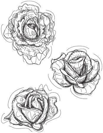 rose: Rose sketch variations