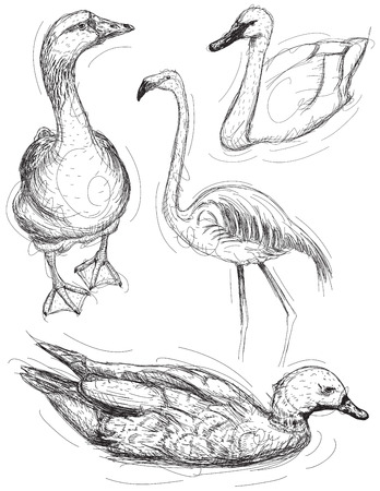 swan: Water bird sketches, A hand drawn goose, swan, pink flamingo, and a duck. Illustration