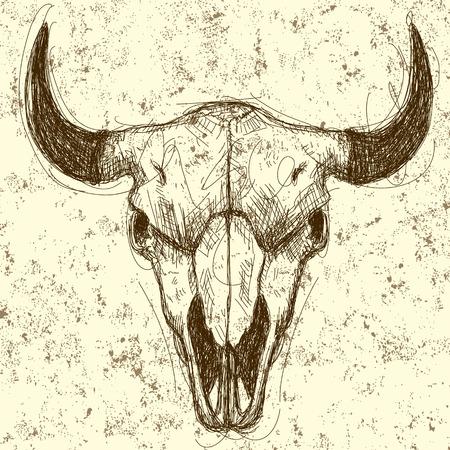 craneo de vaca: Cr�neo de la vaca dibujo sobre un fondo abstracto. La obra de arte y el fondo est�n en capas separadas etiquetadas. Vectores
