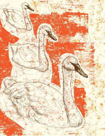 swans: Swan background, Sketchy swans over an abstract background. The birds and background are on separately labeled layers.