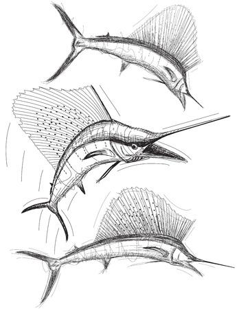 pez vela: Bocetos Sailfish Vectores