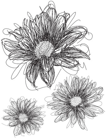 daisies: Daisy sketches Illustration