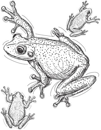tree frogs: Frog sketches Illustration