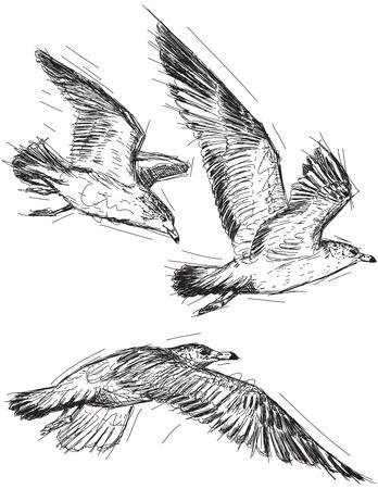 oiseau dessin: Vol de mouettes