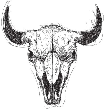 craneo de vaca: Bosquejo del cr�neo de la vaca
