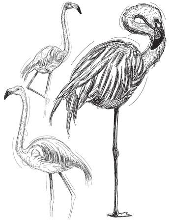 flamingi: Sketchy flamingos