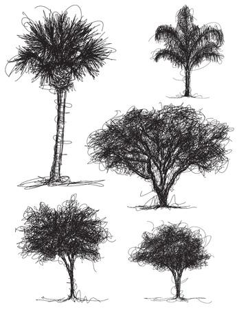 roble arbol: Garabatos del árbol