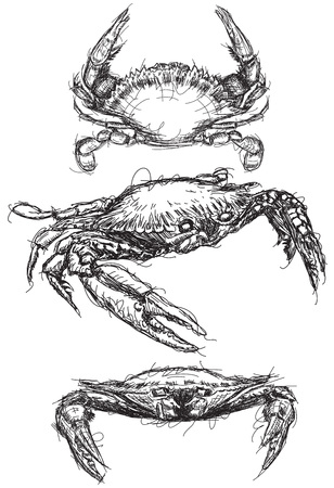 Crab sketches