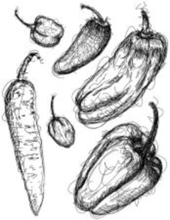 jalapeno pepper: Chili pepper sketches