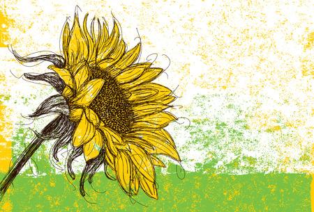 sunflower: Sunflower