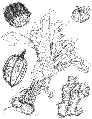 radicchio: Mix vegetable sketches