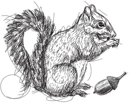 Squirrel nut sketch