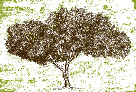 Sketchy wide oak tree
