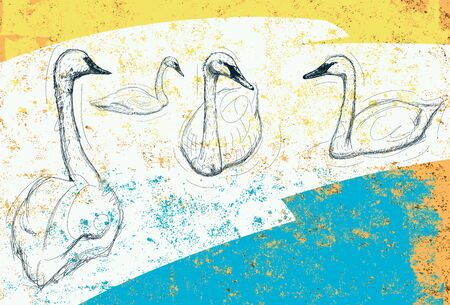 cisnes: Cisnes Vectores