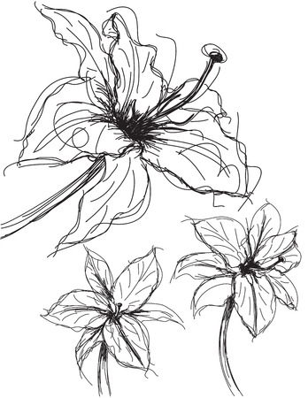 the petal: Lily sketches