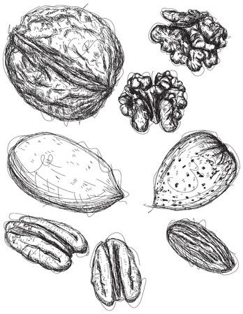 Walnut, pecan, and almond sketches Stock Illustratie