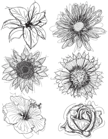 daisies: Assorted flower head sketches