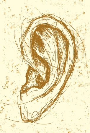 oido: Dibujo Oído Vectores