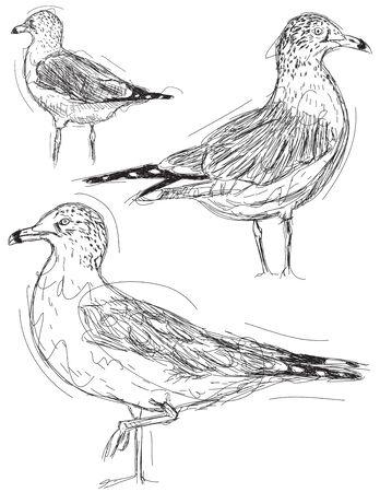 Seagull sketches Ilustração