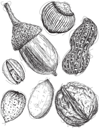 mixed nuts: Multiple nut sketches