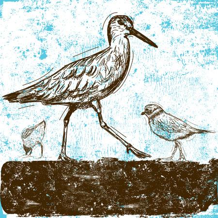 waders: Las aves oceánicas Vectores