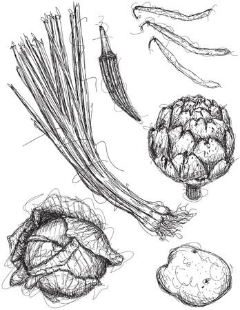 Vegetable sketches Illustration