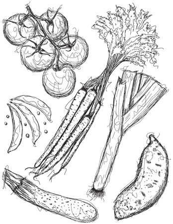 Vegetable sketches Ilustração