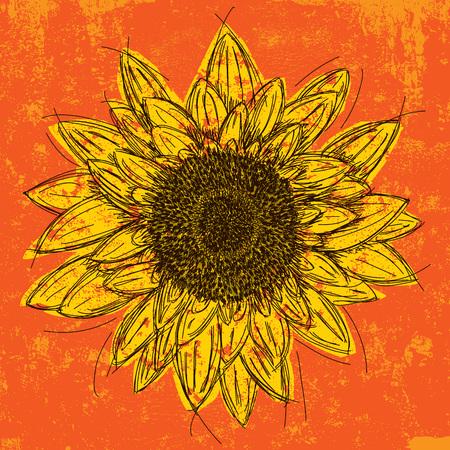 sunflower drawing: Sunflower