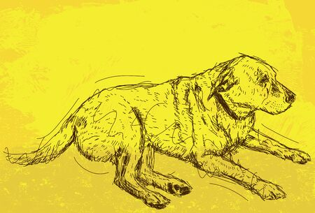 resting: Resting Dog