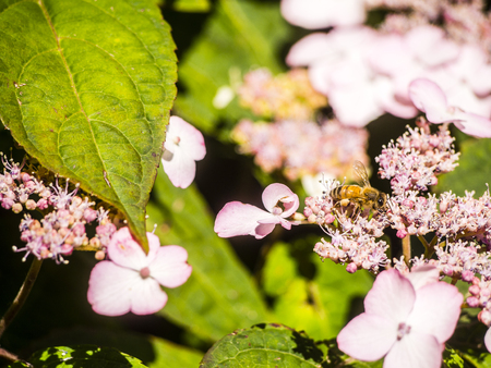 Bumble-Bee flying, sitting and working out a flower Stock Photo