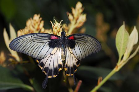 A giant exotic butterfly sitting on a plant Stock Photo - 2611270