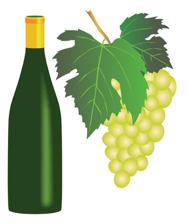 white riesling grape: white grapes and a bottle of white wine on white background Illustration