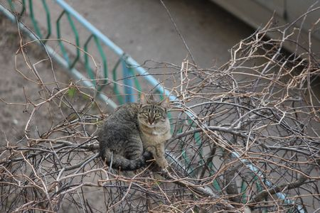 climbed: April. Cat waiting progeny climbed a tree near the house and only occasionally down for food.