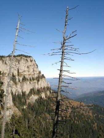 Dode bomen In de bergen